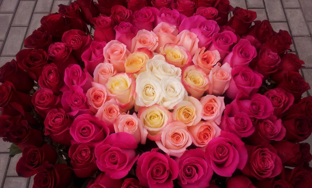 Цены на наши розы начинаются от 60₽!