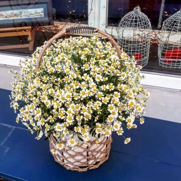 Композиция №205 цветы в корзине